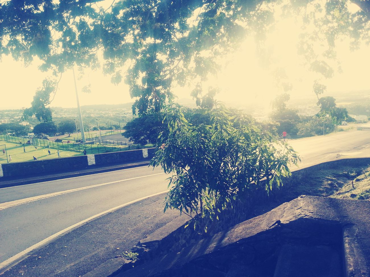 Soleil d'été ~ Reunion Island ✊