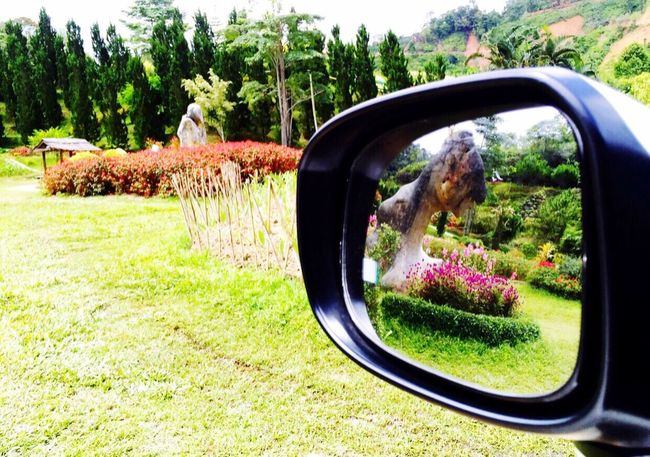 Home Is Where The Art Is Flowers In The Mirror Flowers,Plants & Garden Flowers, Nature And Beauty Nature_collection Landscape_collection EyeEmNatureLover In The Mirror Inside A Car Flowers_garden_in_betong_thailand_🇹🇭