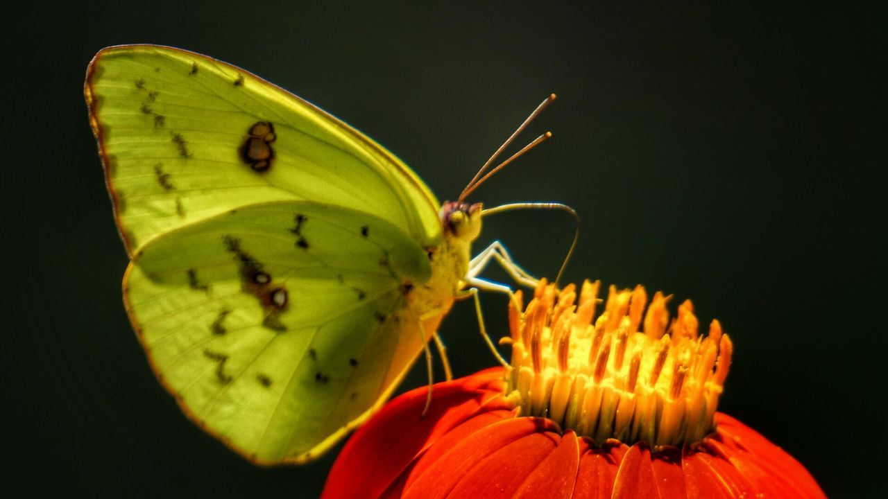Animals In The Wild Wildlife One Animal Insect Animal Themes Butterfly - Insect Butterfly Close-up Green Color Extreme Close-up Animal Antenna Animal Wing Zoology Focus On Foreground Nature Invertebrate Antenna No People Beauty In Nature Springtime Butterfly Collection Butterfly On Flower Butterflies And Flowers Butterlfly Flowerphotography