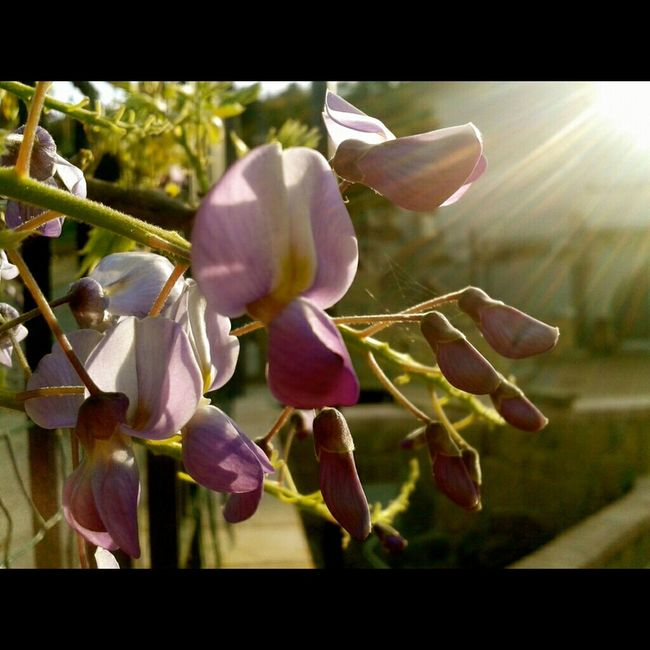 The frailty of beauty Silhouette Nature Flowers Light And Shadow Violet Blooming Spring Sunlight