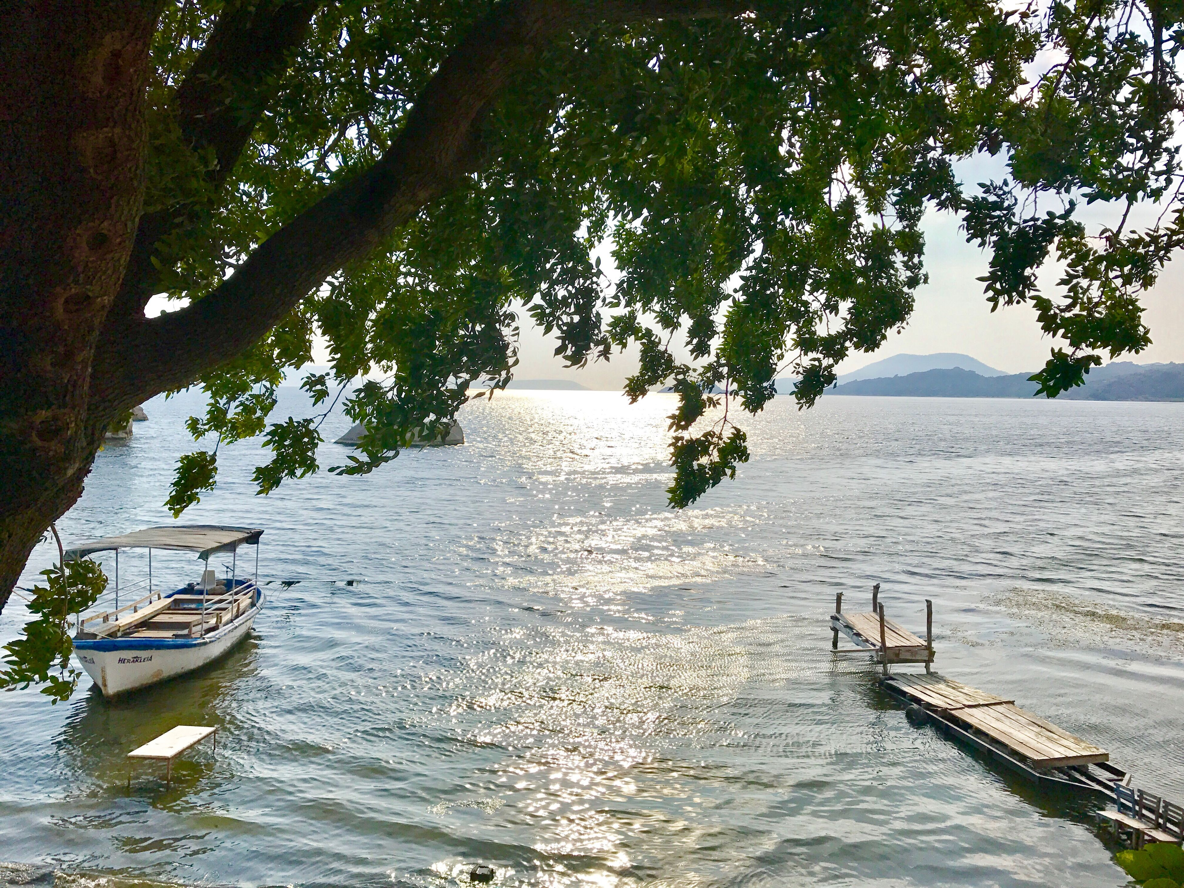 tree, nature, tranquility, water, scenics, tranquil scene, transportation, nautical vessel, beauty in nature, outdoors, day, no people, lake, moored