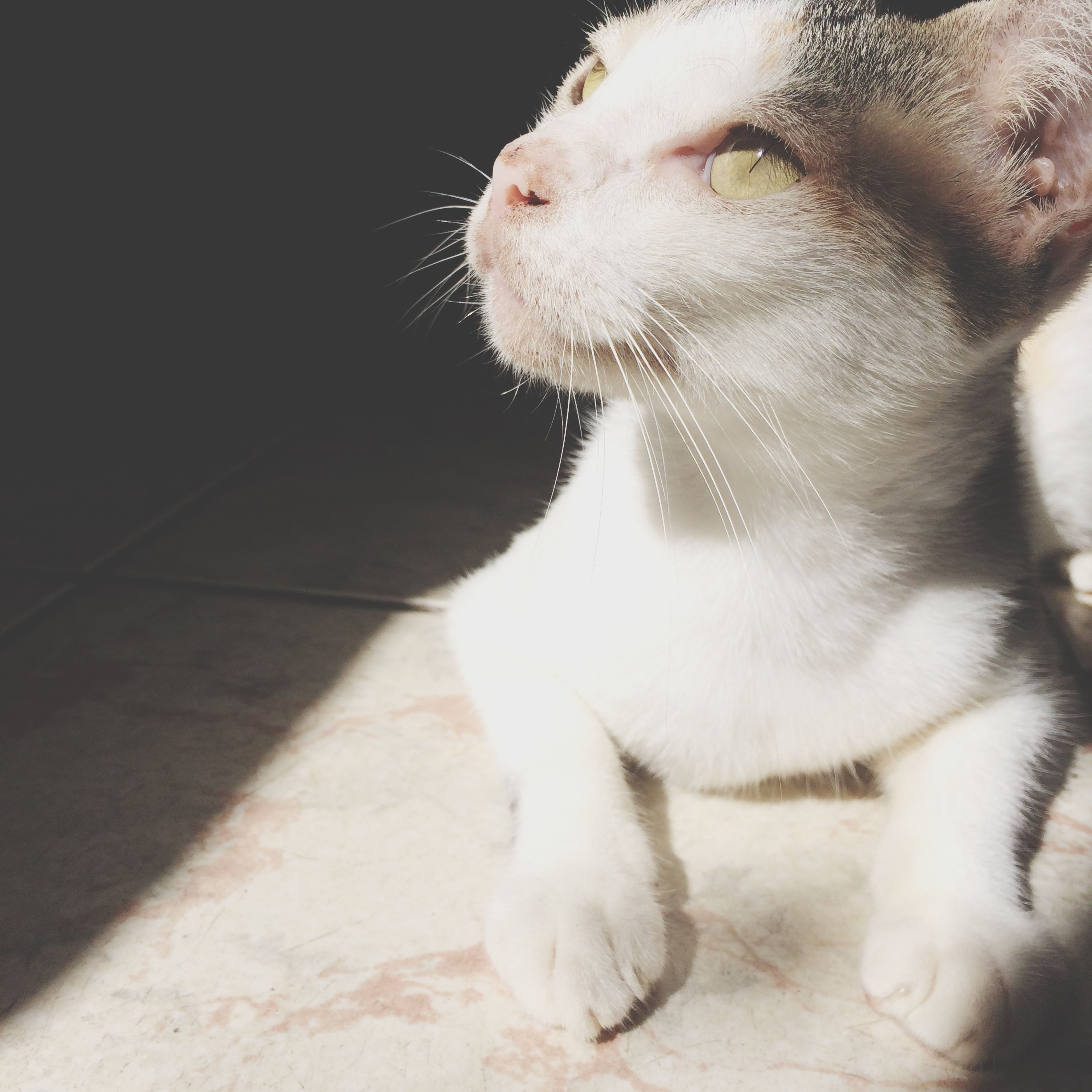 pets, domestic animals, animal themes, mammal, one animal, domestic cat, cat, feline, dog, indoors, relaxation, whisker, high angle view, close-up, sunlight, sitting, looking away, no people, day, home interior