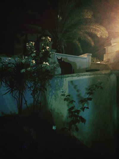 My Guardian at night! Flowers At Night Loving Flowers Love Cats