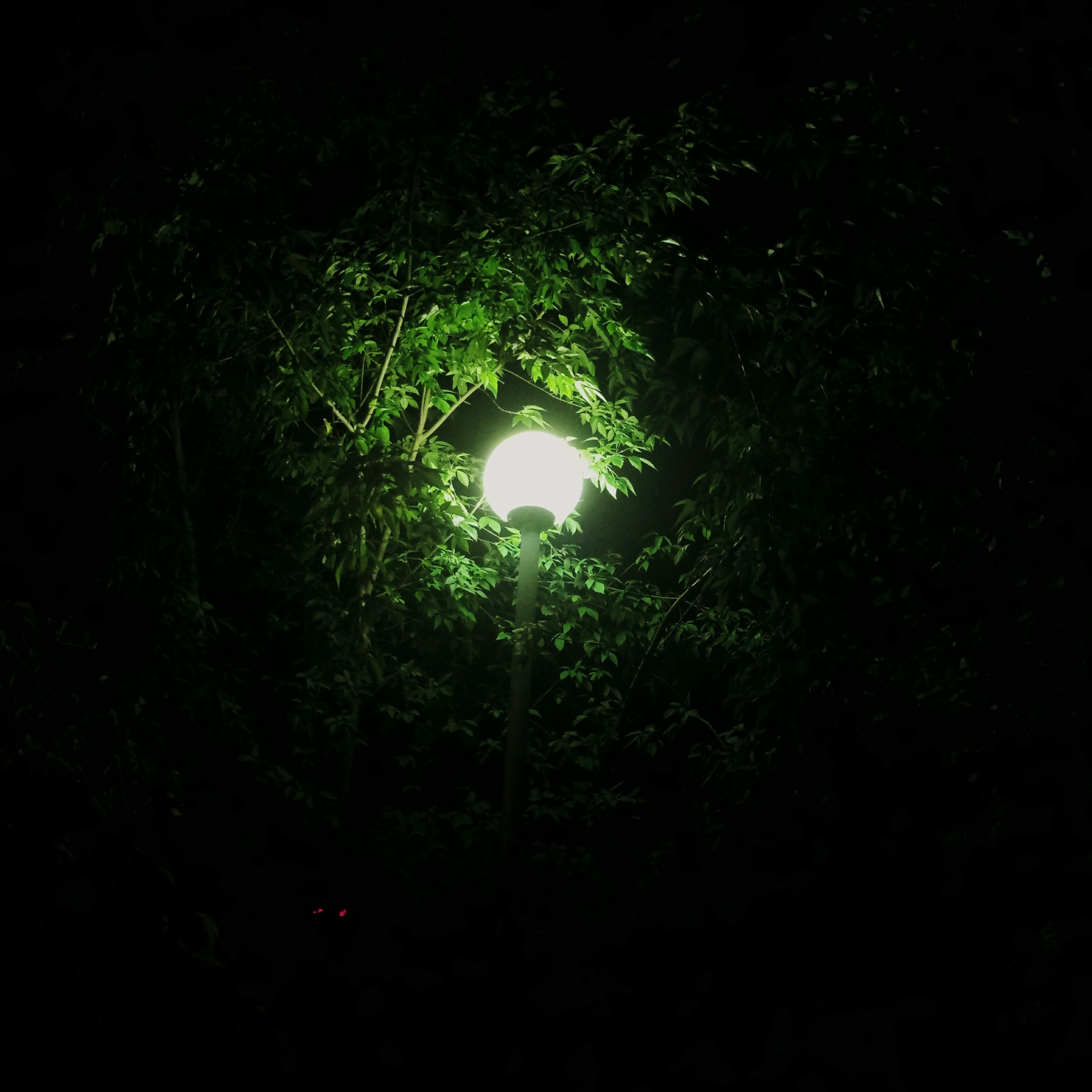 street light, lighting equipment, illuminated, low angle view, tree, night, dark, electric light, growth, glowing, tranquility, nature, branch, outdoors, scenics, sky, back lit, green color, tranquil scene, lit, light beam, beauty in nature, no people, woods