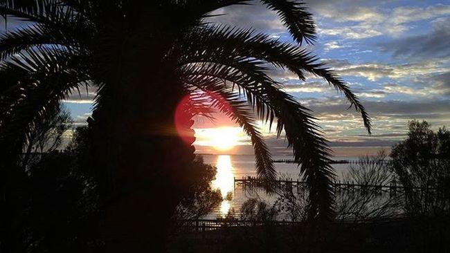 Beautiful Sunset tonight LoveFl Emeraldcoast Emeraldcoasting Palmtrees Automode HDR LGG4 Lazerfocus Lgfanview Navarre @lggulf @lgusamobile @lgus @lgmobileglobal @LGUSAMobile @sharealittlesunshine @pureflorida Beachlife Reflection