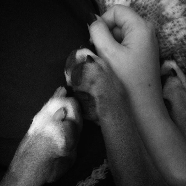 Pawfect love. Paws Furbabies Furkids Mydogsarefamily Bostondog Lillydog Lovedogs Linedup
