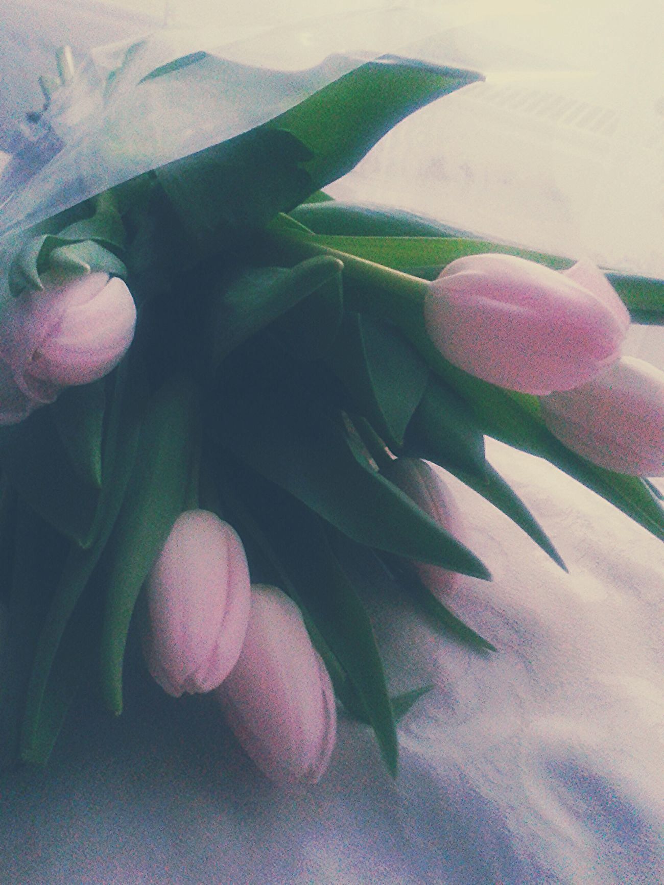 Flowers Spring Has Arrived Spring Flowers Boyfriend❤