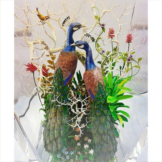 Life_in_a_jar Iitb Techfest Peacock a miniature model displayed in techfest ♥♥ InstaMumbai collegecampus photographyshoutout3 selfclicked bns_flowers camera_incentives art 1000thingstodoinmumbai pretty flower happy