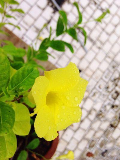 After women,flowers r d most Divine creation... First Eyeem Photo
