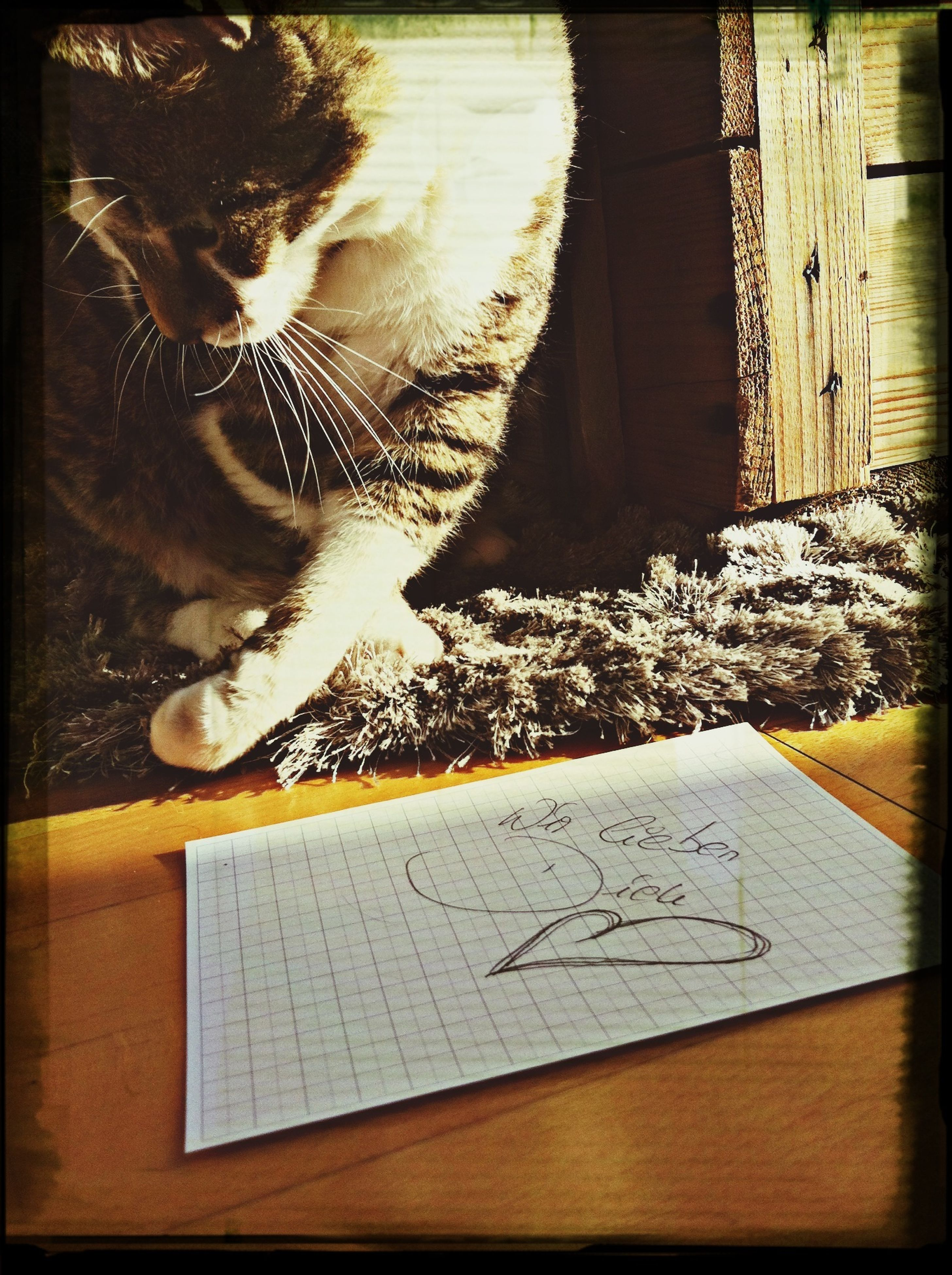 transfer print, indoors, auto post production filter, domestic cat, table, pets, high angle view, domestic animals, cat, one animal, mammal, animal themes, close-up, wood - material, home interior, feline, no people, sunlight, paper, elevated view