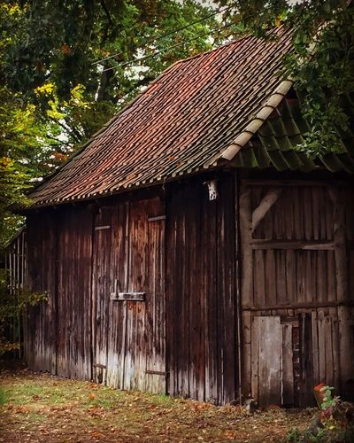 Cottage in the woods Outdoors Wood - Material No People House Nature Tree Still Life