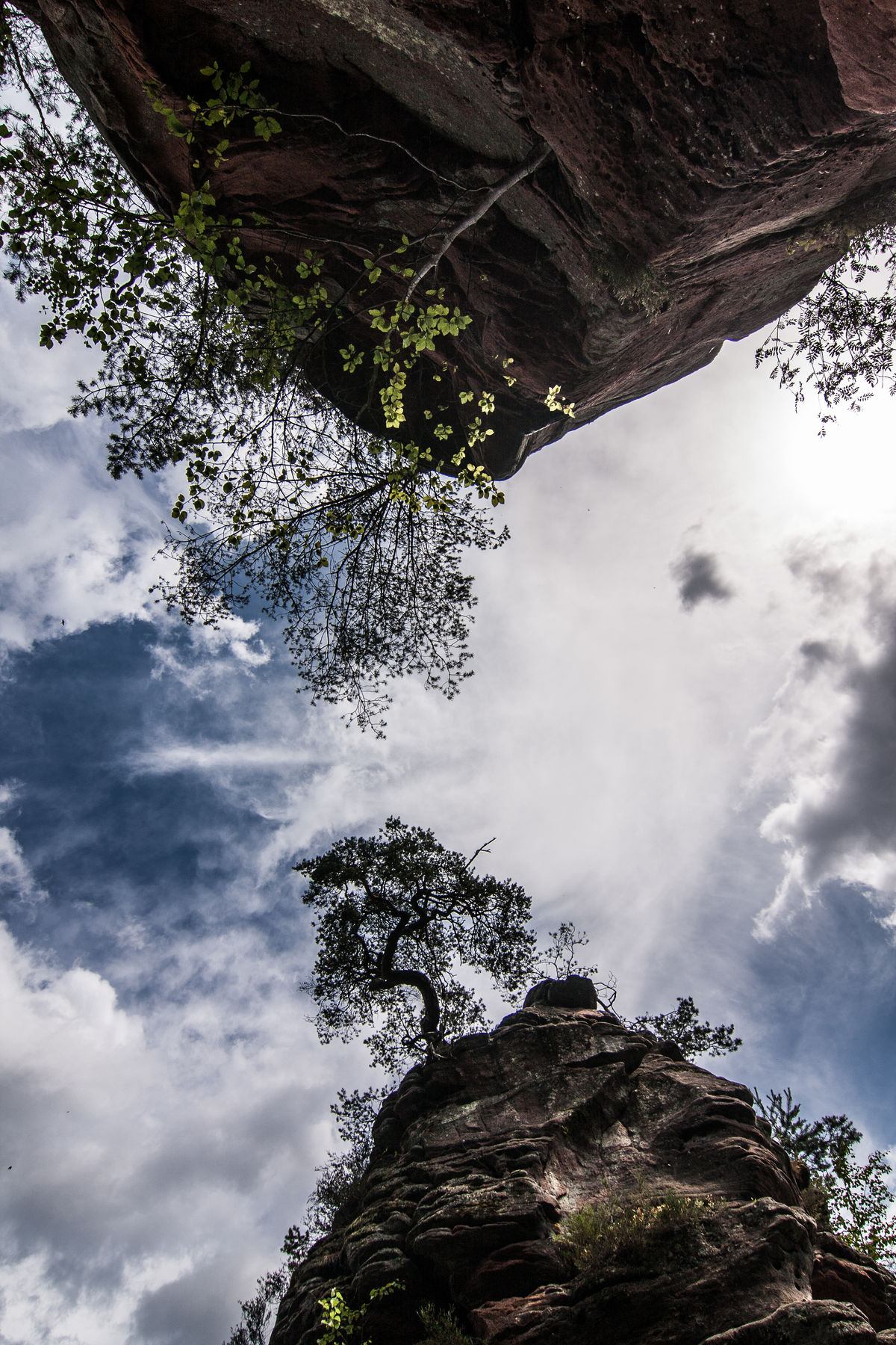 Pfälzerwald Beauty In Nature Cloud - Sky Dahner Felsenland Day Growth Low Angle View Mountain Nature No People Outdoors Rock - Object Scenics Sky Tranquil Scene Tranquility Tree