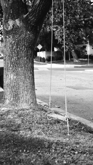 Blackandwhite Photography Nature's Art - Tree Trunk Rope Swing Swingswingswings Tree Swing Childhood Memories The Story Behind The Picture Every Picture Tells A Story No People Taking Pictures