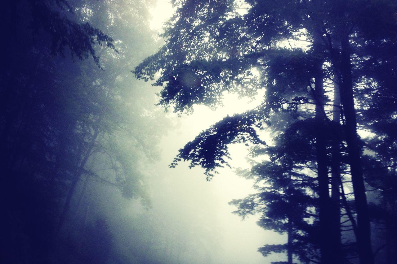 Melancholic Landscapes Eye4photography  Trees Autumn