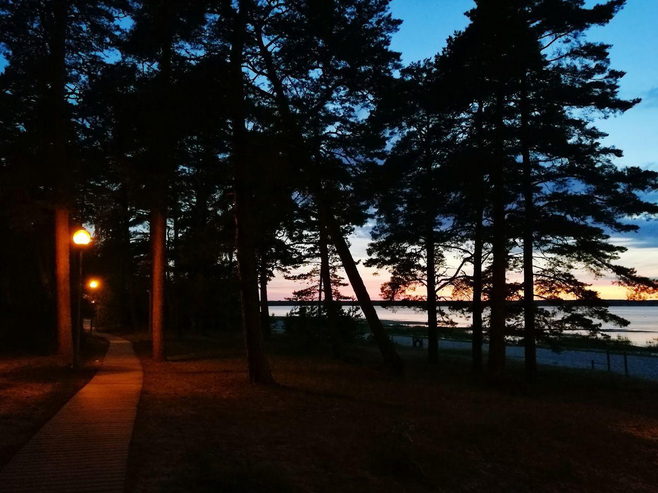 tree, night, nature, no people, tranquility, tree trunk, outdoors, beauty in nature, illuminated, scenics, sky