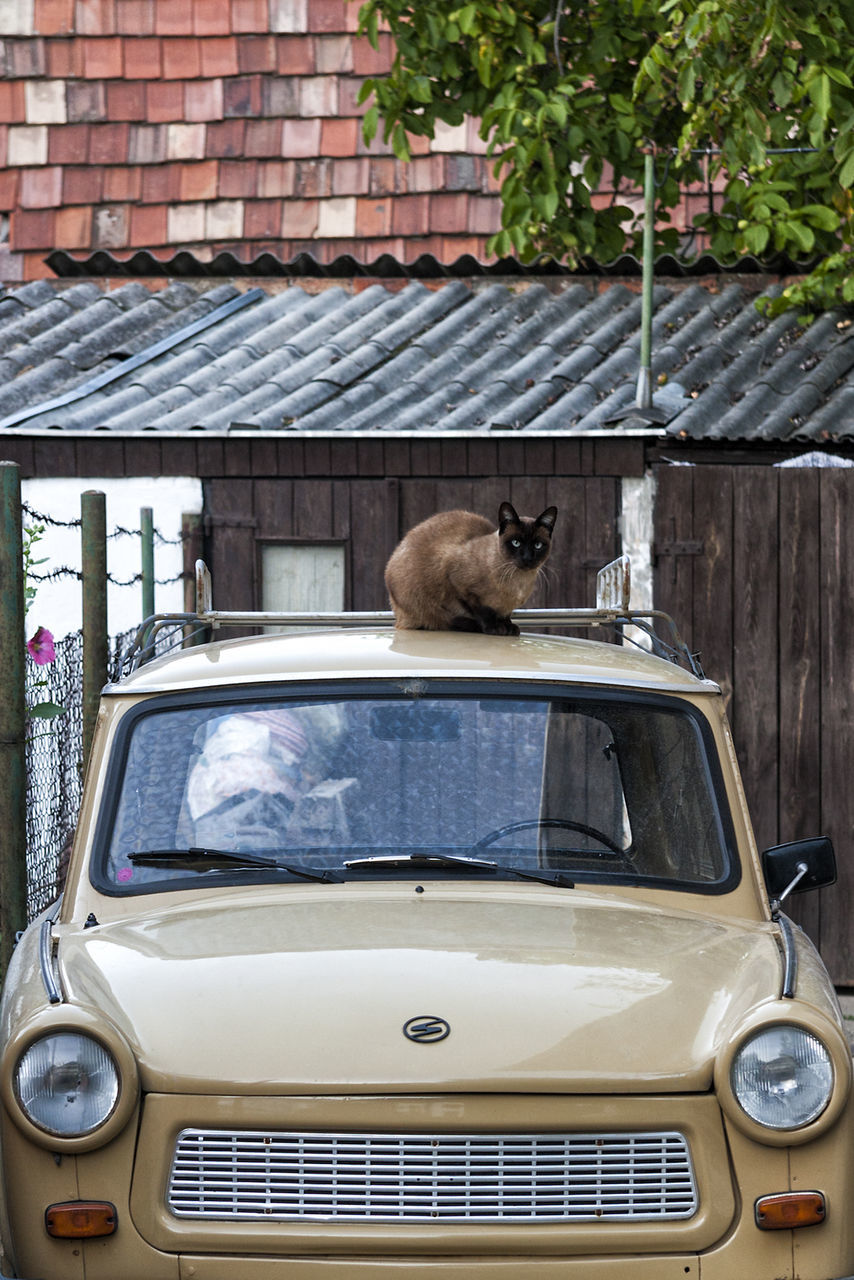car, transportation, one animal, animal themes, land vehicle, mammal, mode of transport, day, animals in the wild, outdoors, no people, animal wildlife, pets, nature