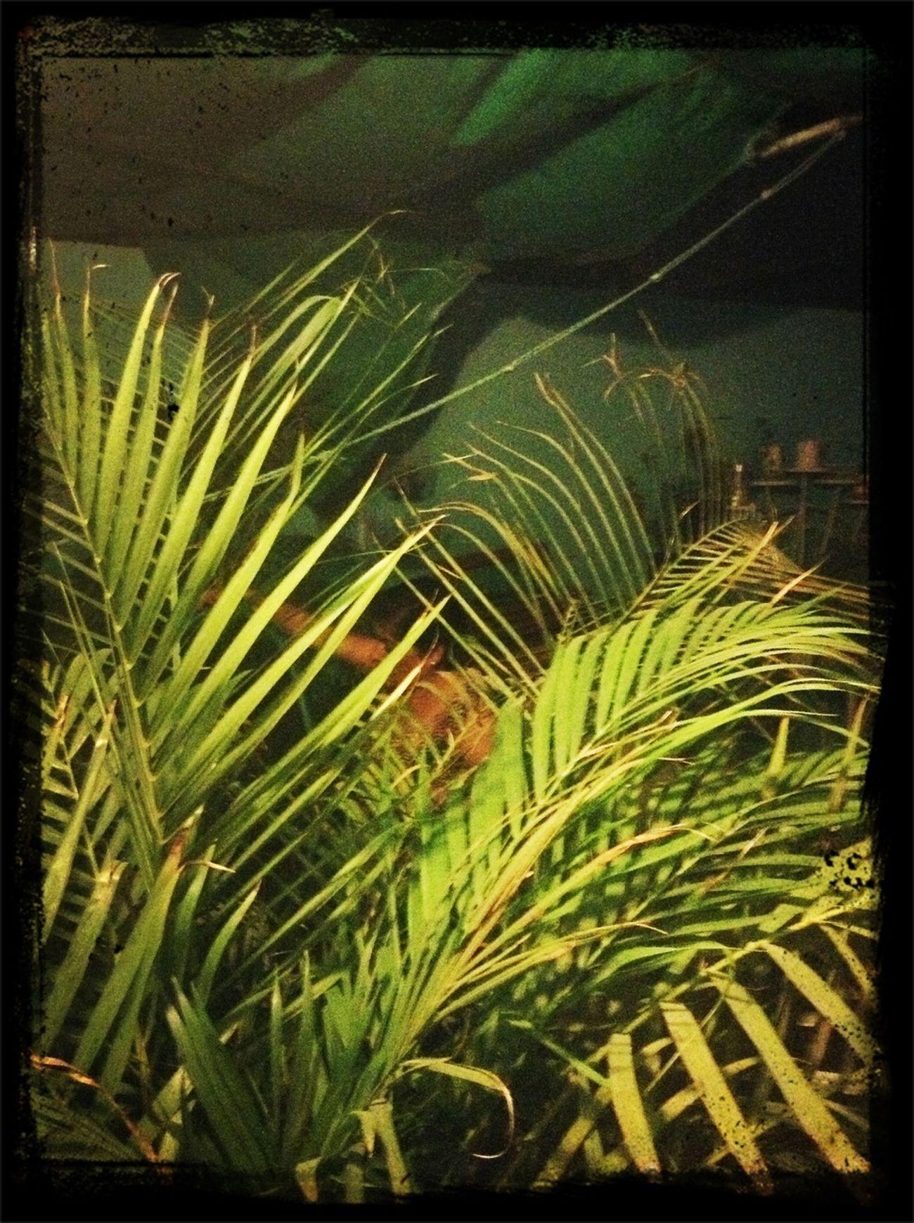 Mi ama en la jungla!