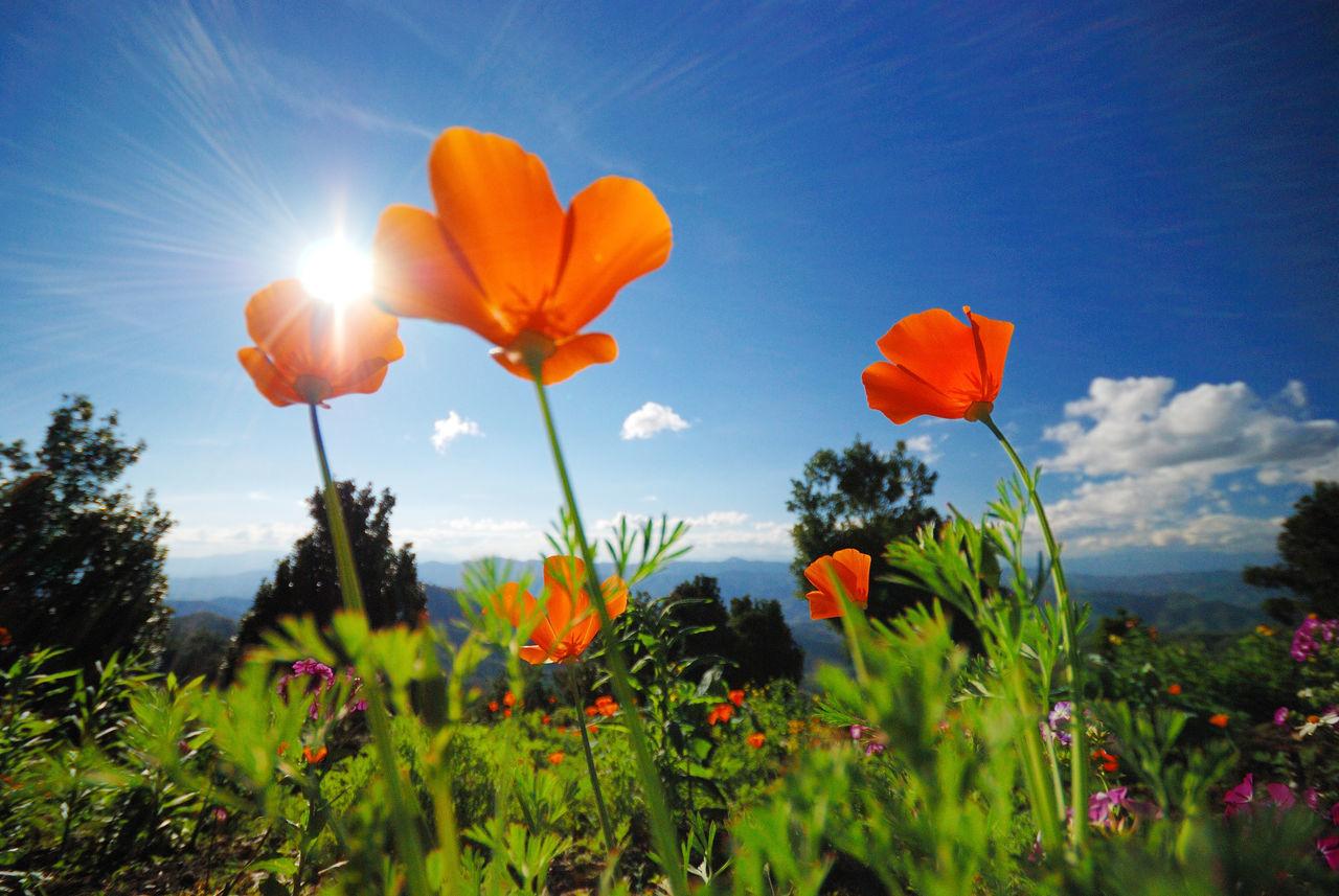Beautiful stock photos of orange, Blue, Close-Up, Day, Flower