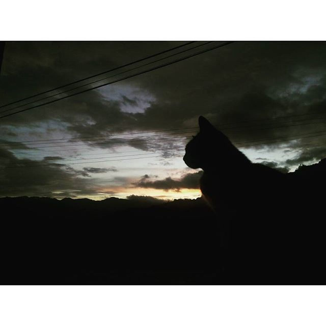 Another evening shot from kundasang... (seems like i am addicted with evening view 🐱) Quelyed Randomawesomes Kundasang Kundasangview Sabah Nature Evening Cat