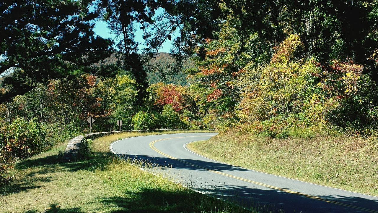 tree, transportation, road, curve, day, no people, nature, the way forward, winding road, beauty in nature, outdoors