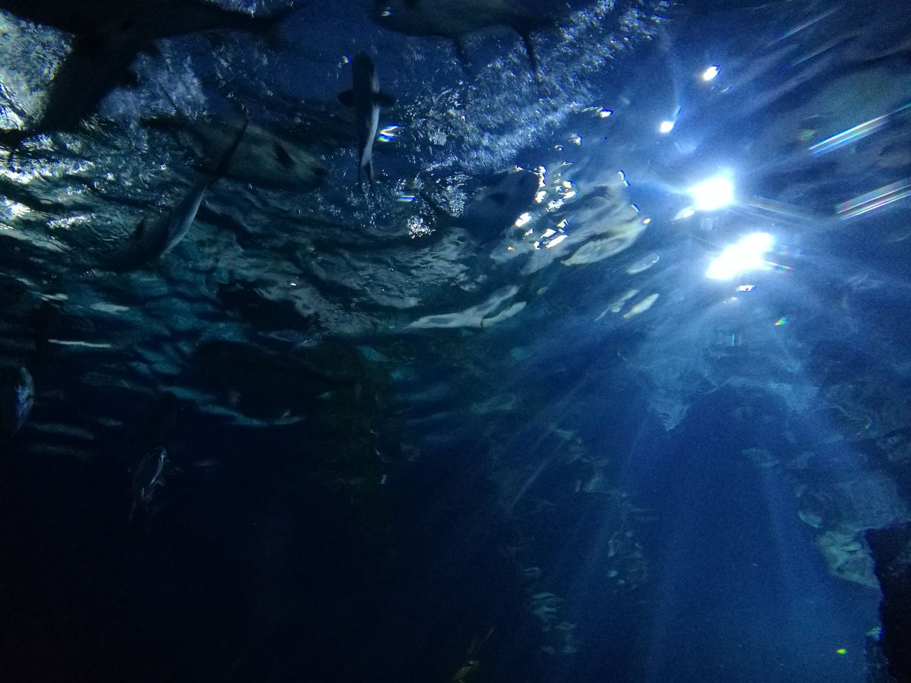 Sea Life Bangkok Sealife Underwater Beauty In Nature Glowing Aqarium HuaweiP9