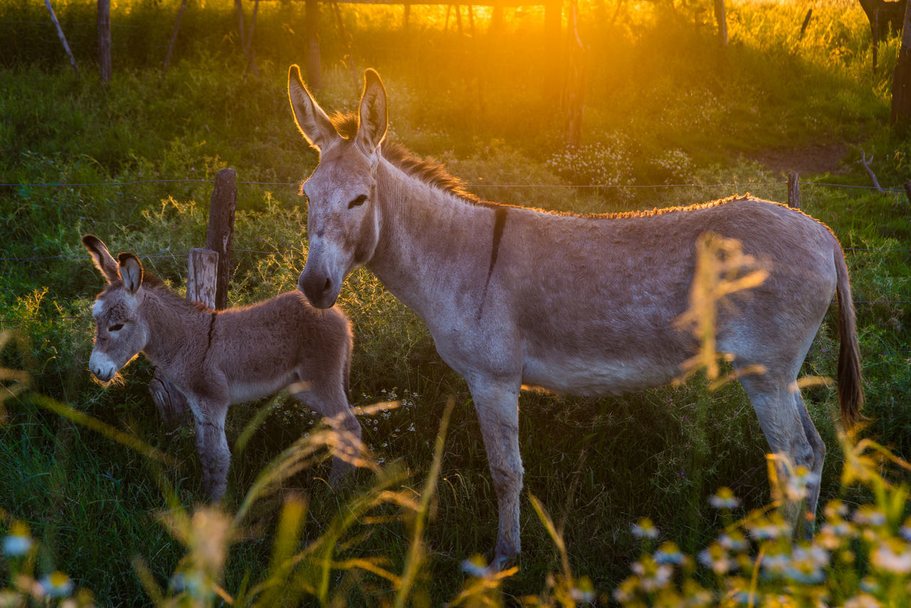 Beautiful stock photos of tierbabys, Animal Themes, Day, Domestic Animals, Donkey