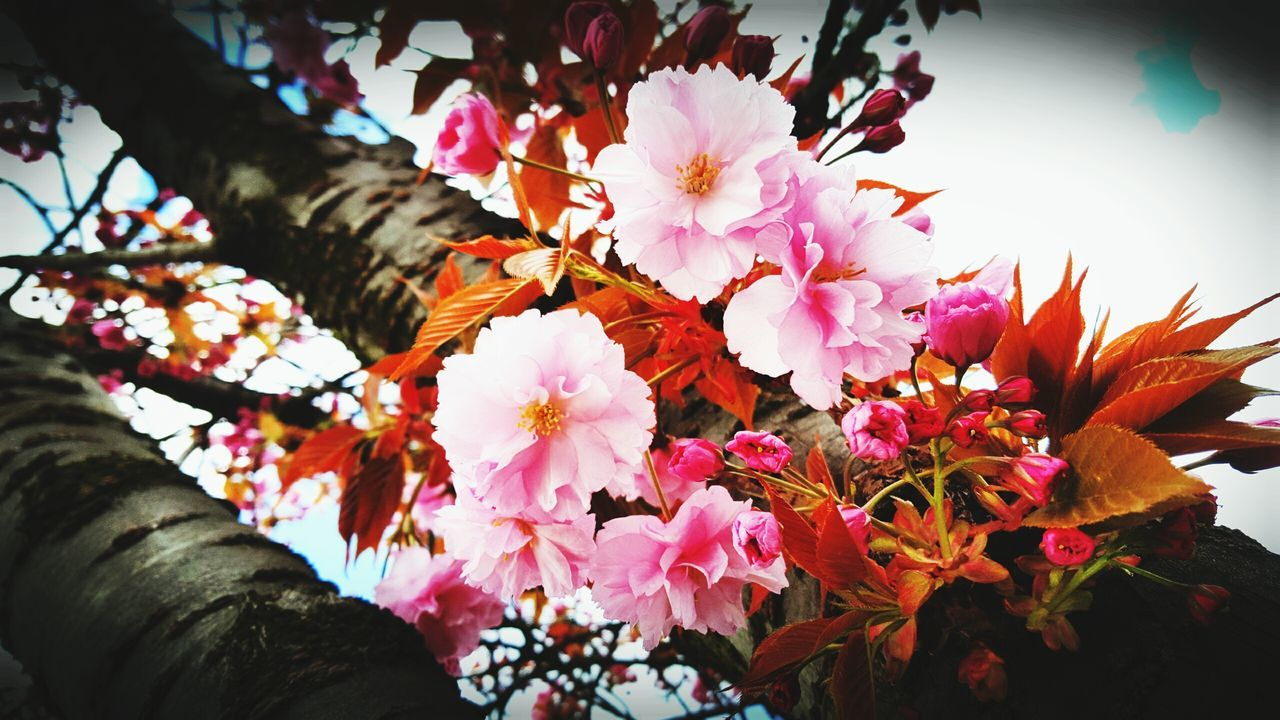 NATUREPORN Hello World First Eyeem Photo Flowers Beautiful Leverkusen Selfmade Samsung Galaxy S6