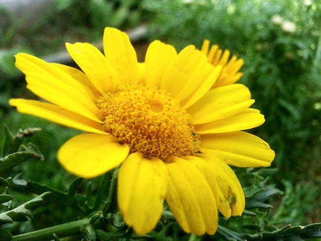 Flowerography... :)