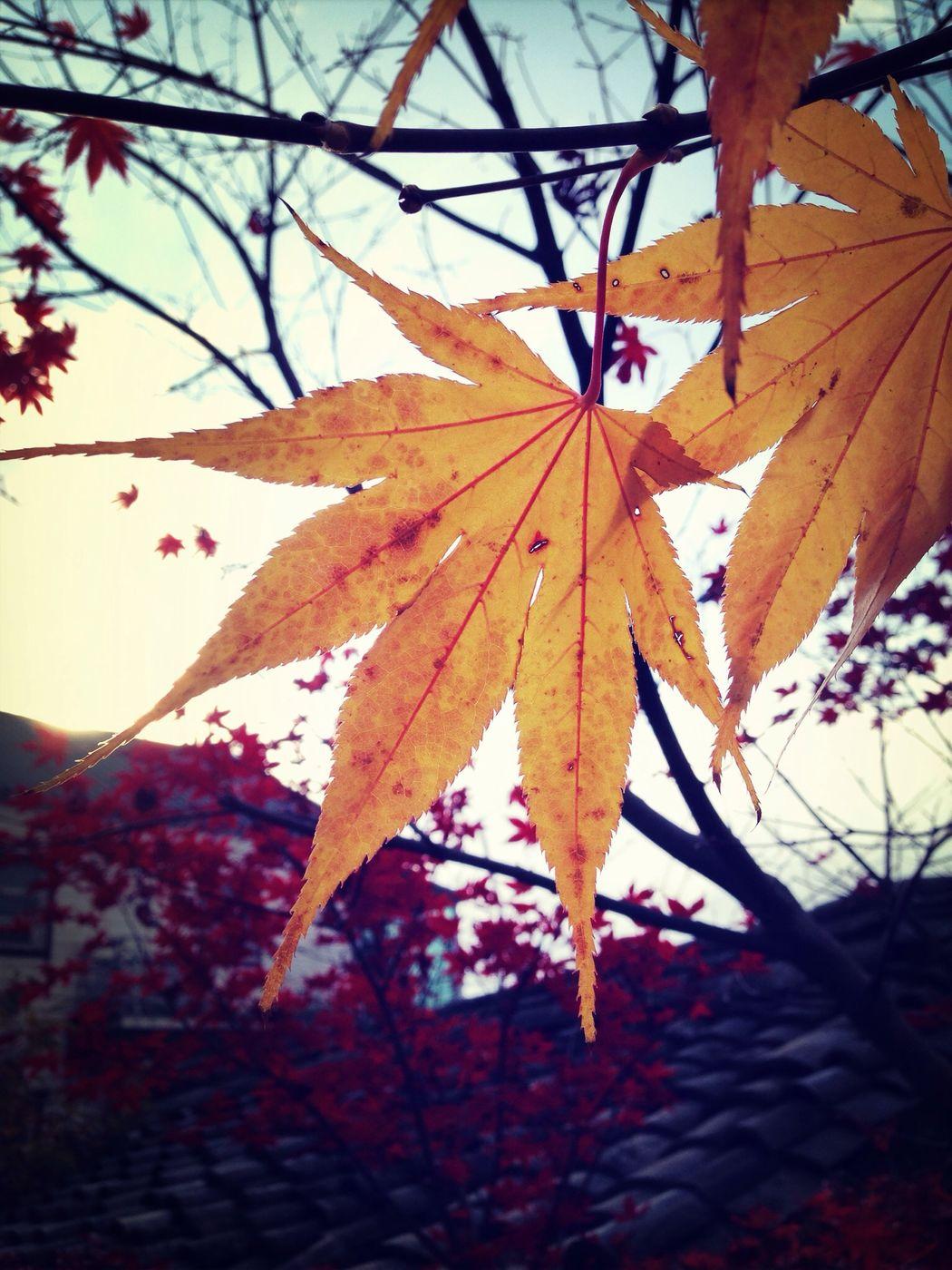 Autumn Color ~? Autumn Leaves