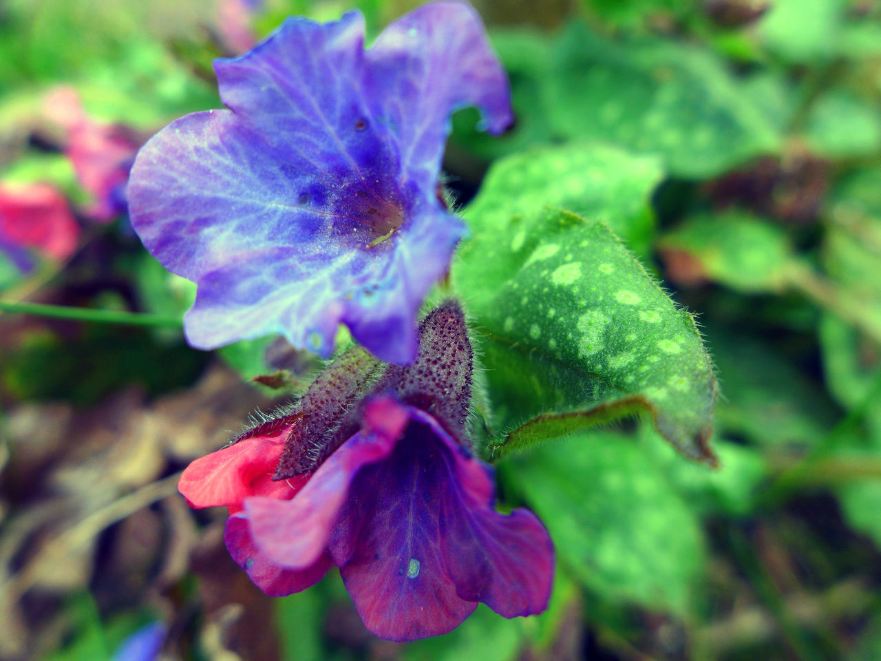 flower, petal, fragility, beauty in nature, growth, nature, flower head, plant, purple, no people, close-up, freshness, outdoors, day, blooming, iris - plant