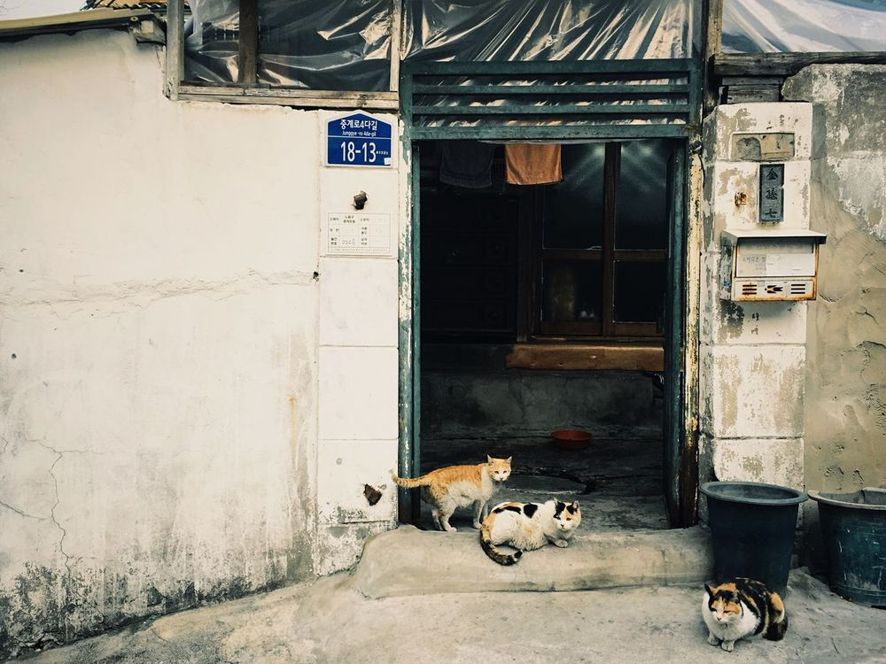 @104 village, Korea Cat Cat♡ Streetphotography Village Photo 60s Architecture 104village EyeEm Gallery Eye4photography  EyeEm Best Shots First Eyeem Photo Mobilephotography Photooftheday Seoul Korea Photography Documentary IPhoneography Hanging Out Taking Photos Old Buildings Old Town Antique Check This Out