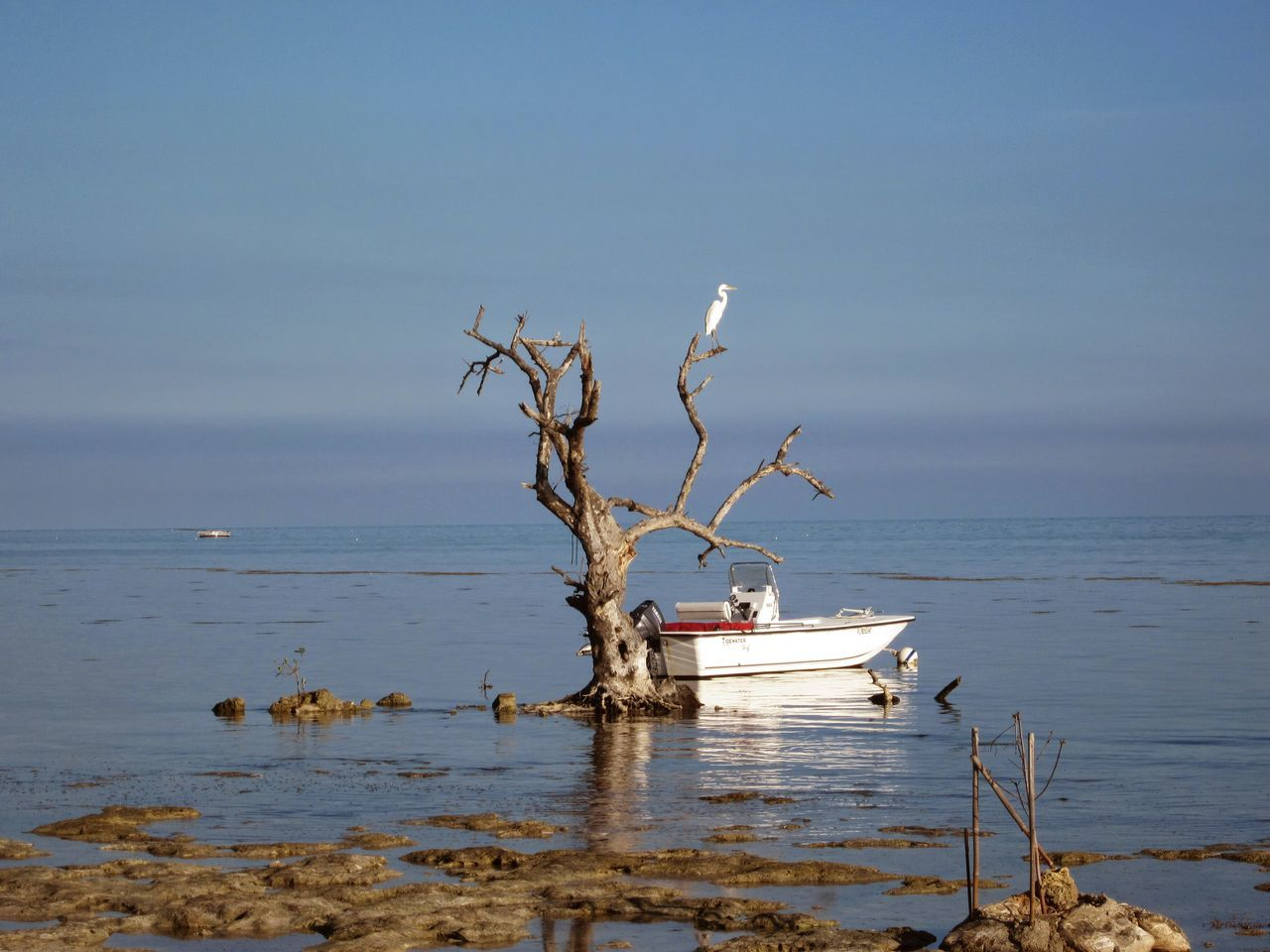 Sea Ocean View Seascape SeasideShore No People Big Pine Key Oceanside Seascapes Shorebird Beauty In Nature Tranquility Water Florida Skies Boats And Sea Bird On A Branch Bird On A Tree Bird And Sea EyeEmNewHere