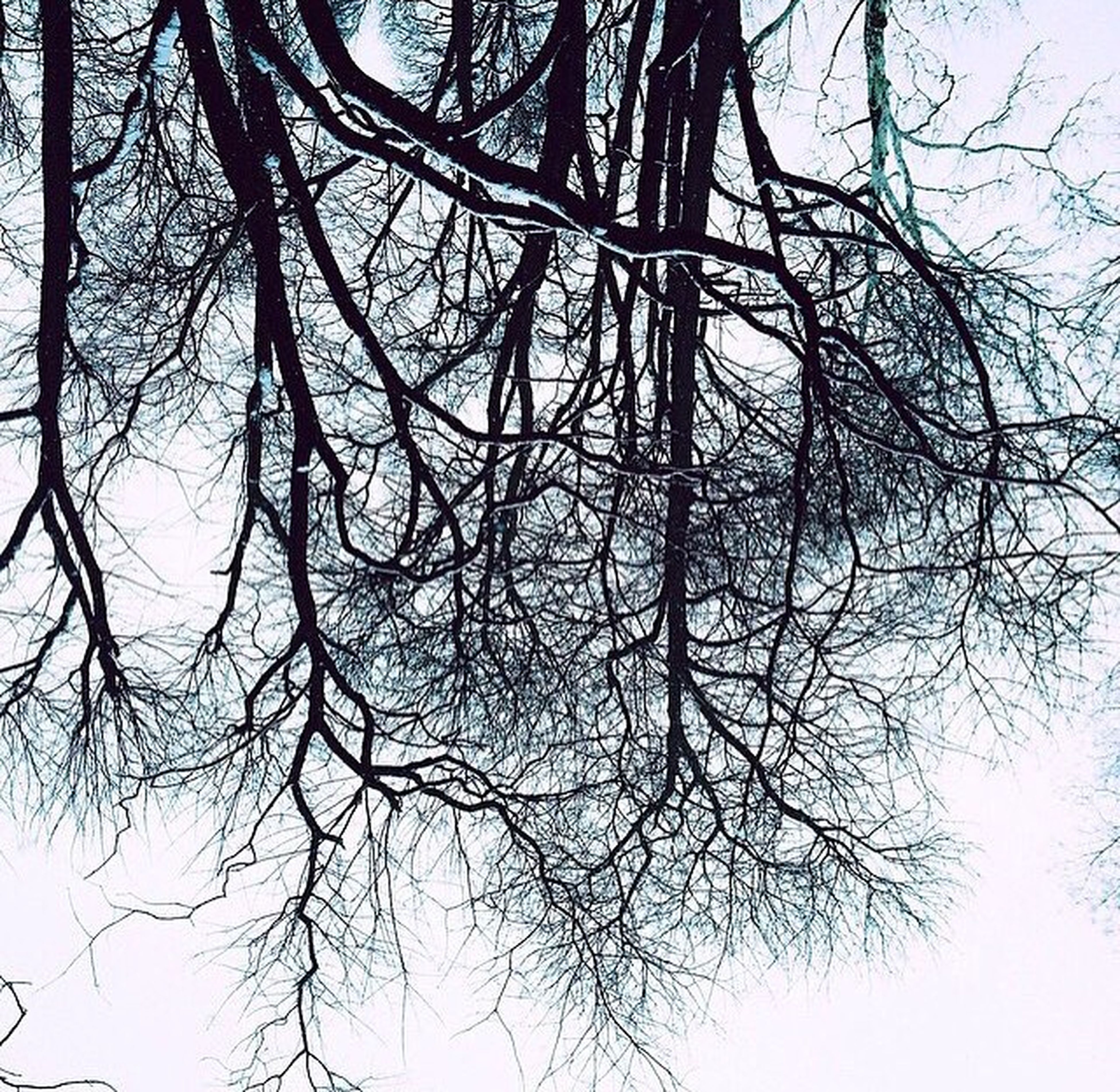bare tree, tree, branch, low angle view, tranquility, nature, tree trunk, clear sky, beauty in nature, sky, scenics, tranquil scene, growth, silhouette, outdoors, day, no people, backgrounds, forest, non-urban scene