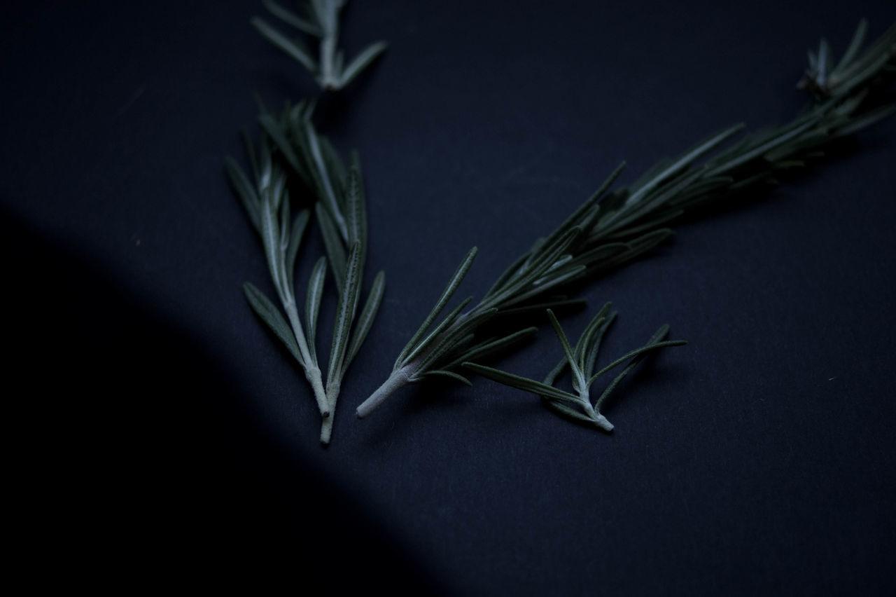 Apothecary Botanical Close-up Herbal Herbalism Herbs Macro No People Plants Rosemary