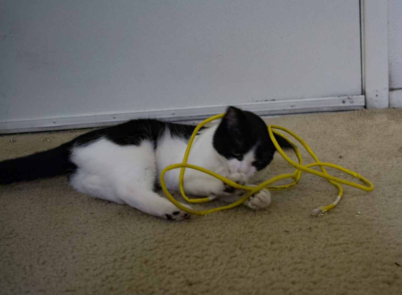 Black and white cat playing with an Ethernet cable. Animal Themes Communication Breakdown Domestic Cat Network Cable Pets Technical Difficulties Technology Troubleshooting
