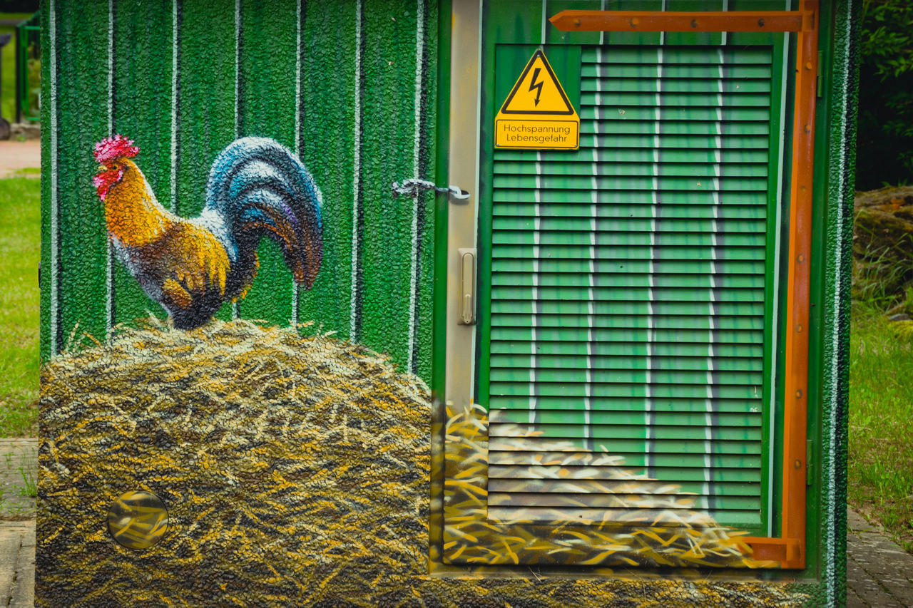 chicken - bird, domestic animals, bird, no people, animal themes, outdoors, yellow, livestock, rooster, day, cockerel, nature, close-up, mammal