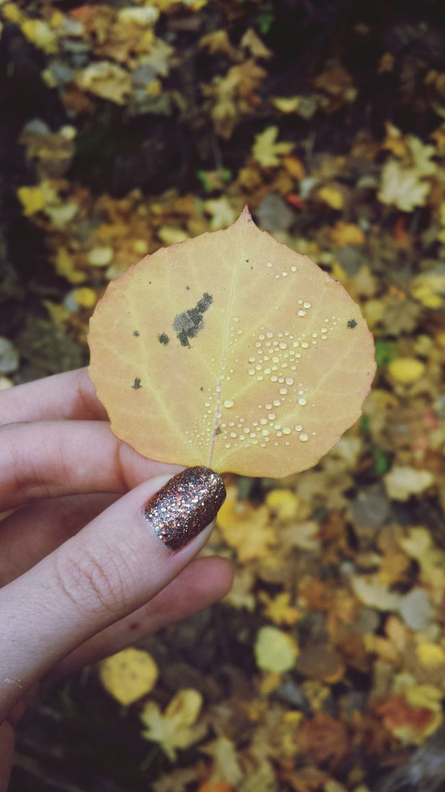 Pearly dewdrops drops :p Halloween Mountlemmon Autumn Nature