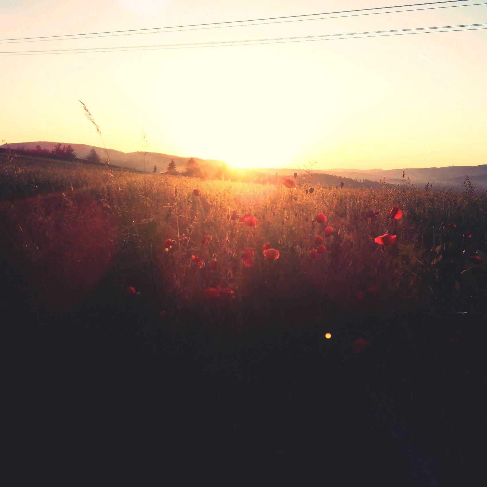 Sunrise Porn 5am Run Nature Refreshing View