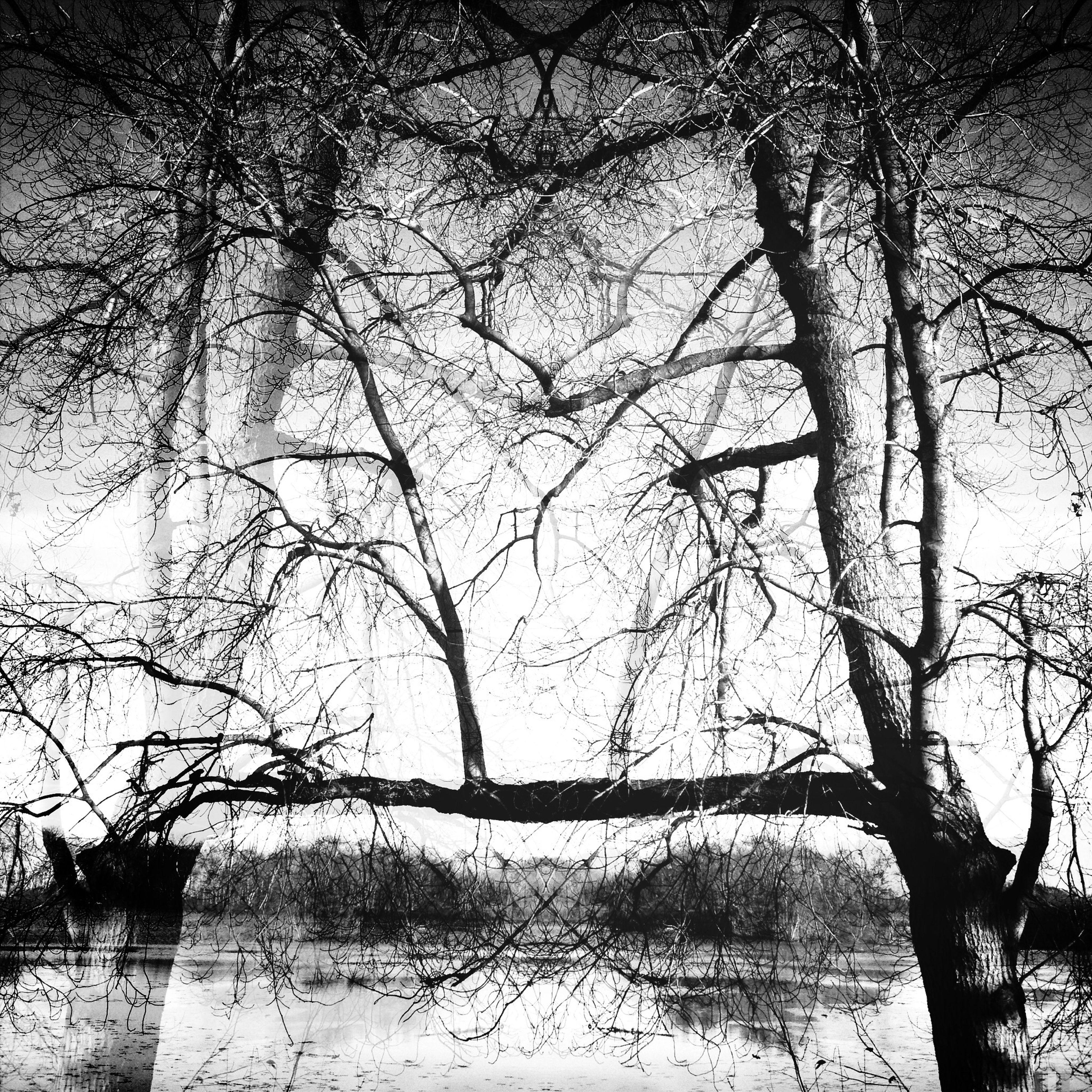 KCe HipstaEdit Sortofsymmetry Treelove