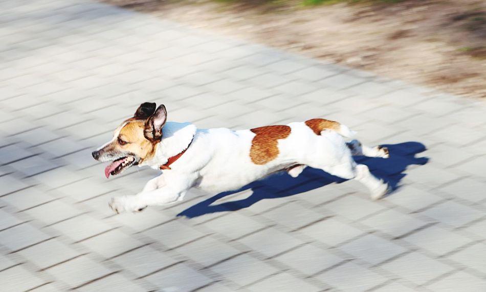 Parc, dog, sun.