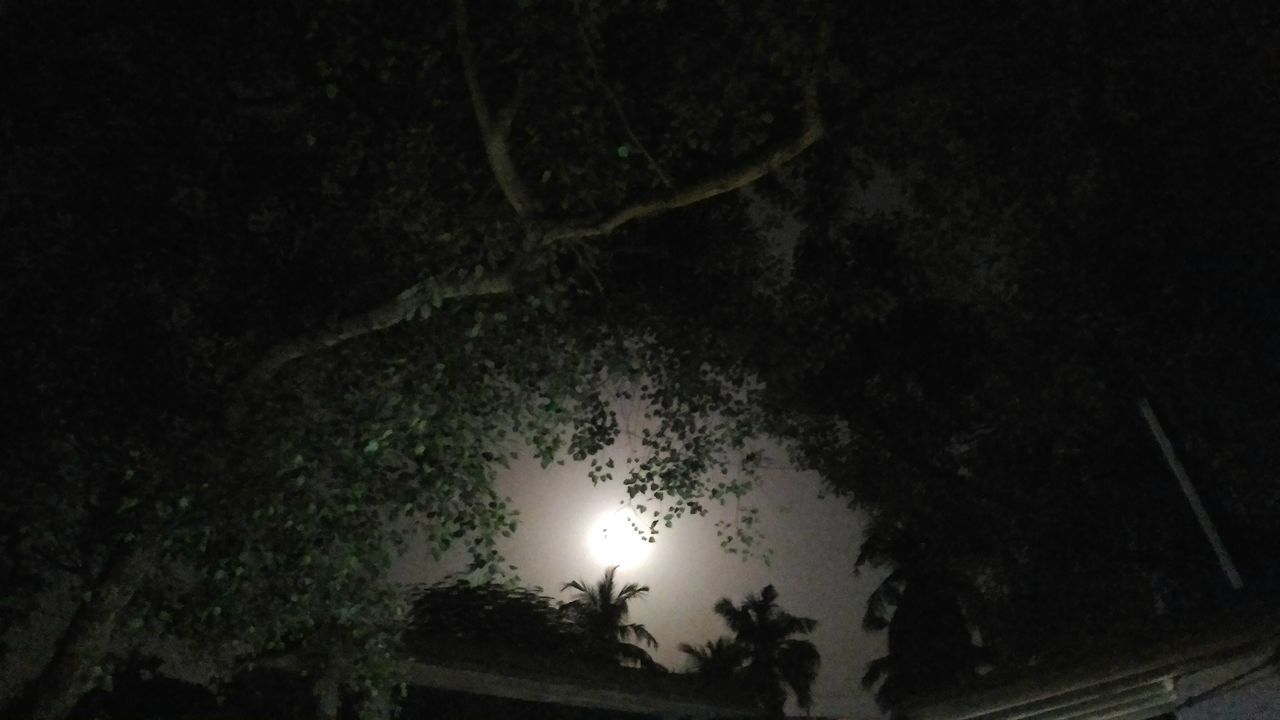 Moonlight Moon Moon Shots Full Moon Night  Full Moon 🌕 Full Moon Light Full Moon Love To Take Photos ❤ Moon Lights Up The Night Moon Light Through Trees Moonphotography Moon Moon_collection Moon Shine Enjoying Life Having Fun :) Trying New Things Taking Pictures Beautiful Nature Landscape Nature Photography LoveNature Save The Planet Save The Nature Night Photography Landscape_Collection