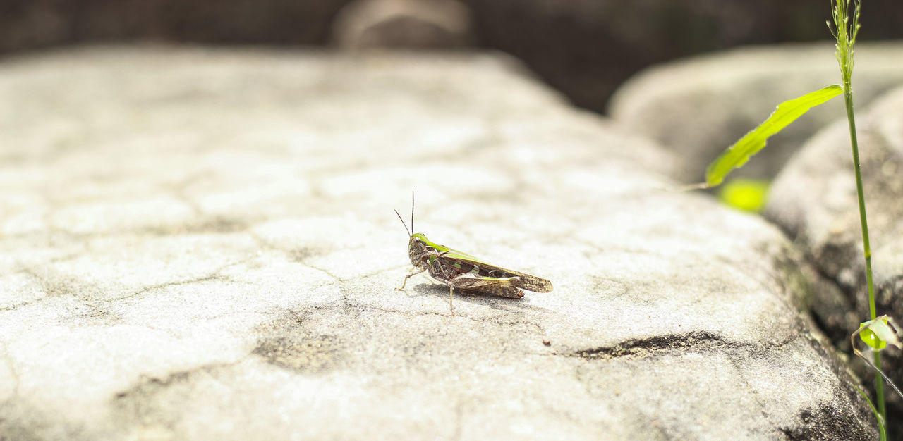 Insect On Rock
