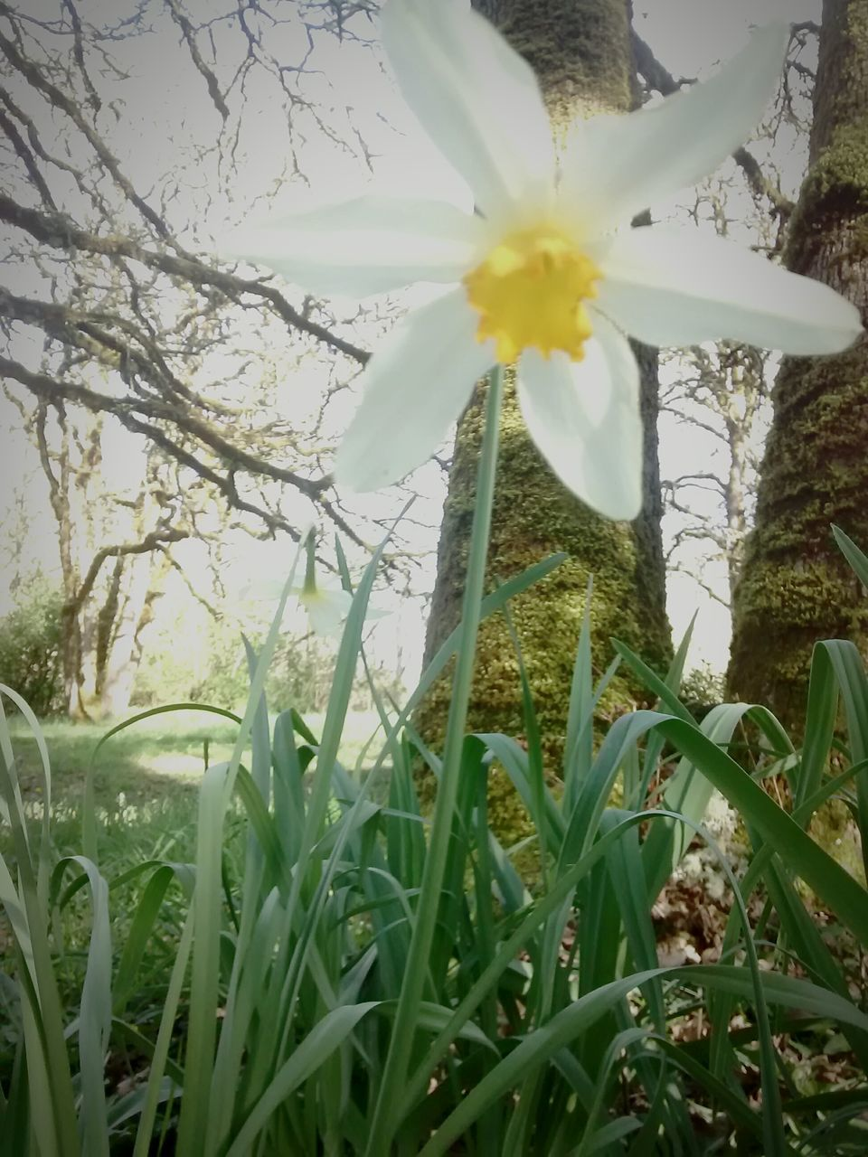 flower, growth, nature, beauty in nature, fragility, freshness, petal, grass, plant, field, no people, green color, day, outdoors, flower head, springtime, close-up, blooming, tree, snowdrop, sky