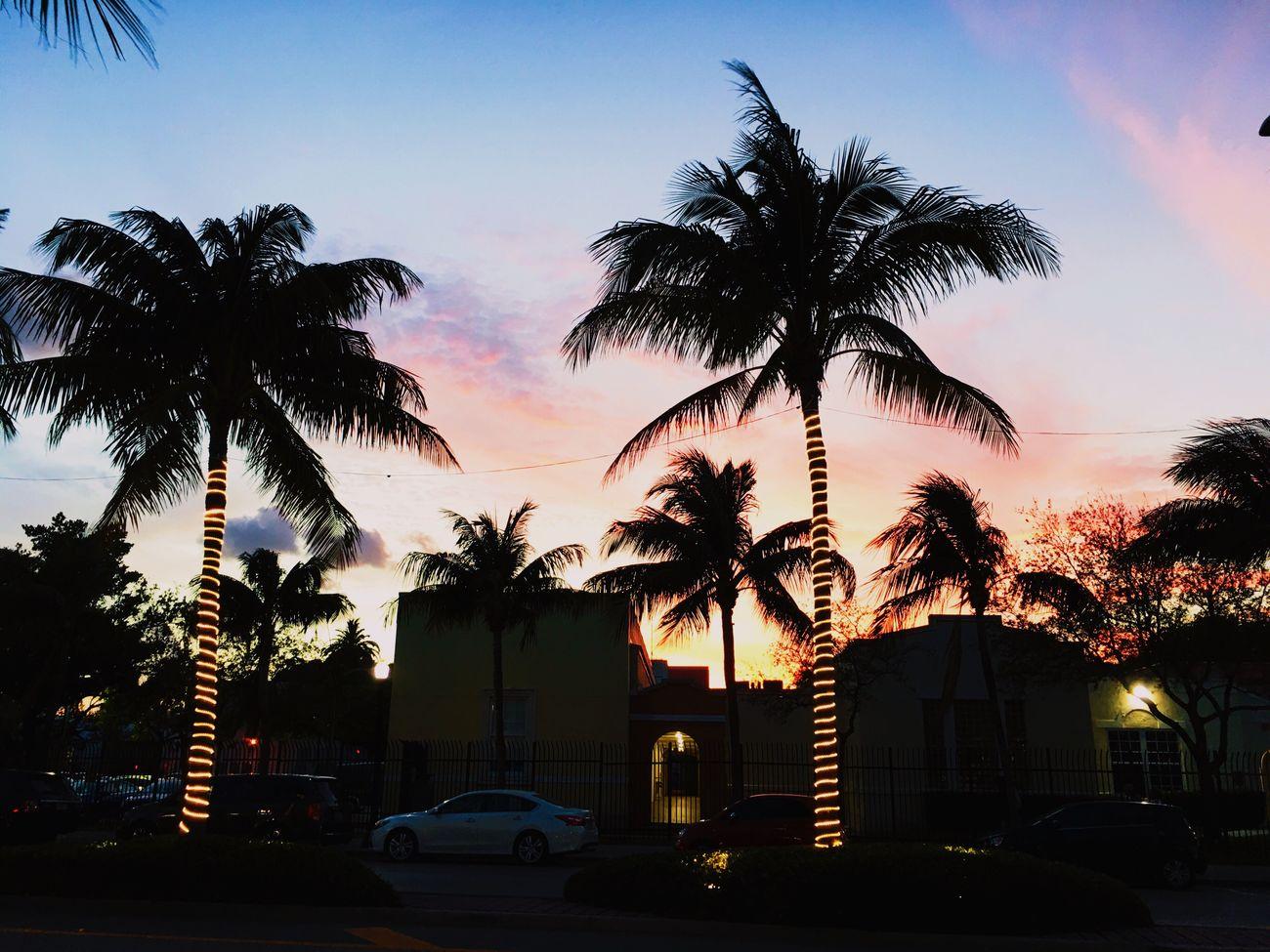 Palm Tree Sky Sunset Silhouette