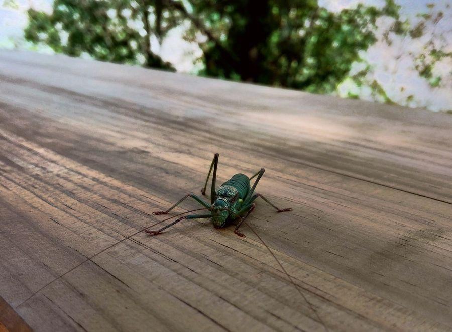 Nature Insect Passadiços Do Paiva, Arouca, Portugal