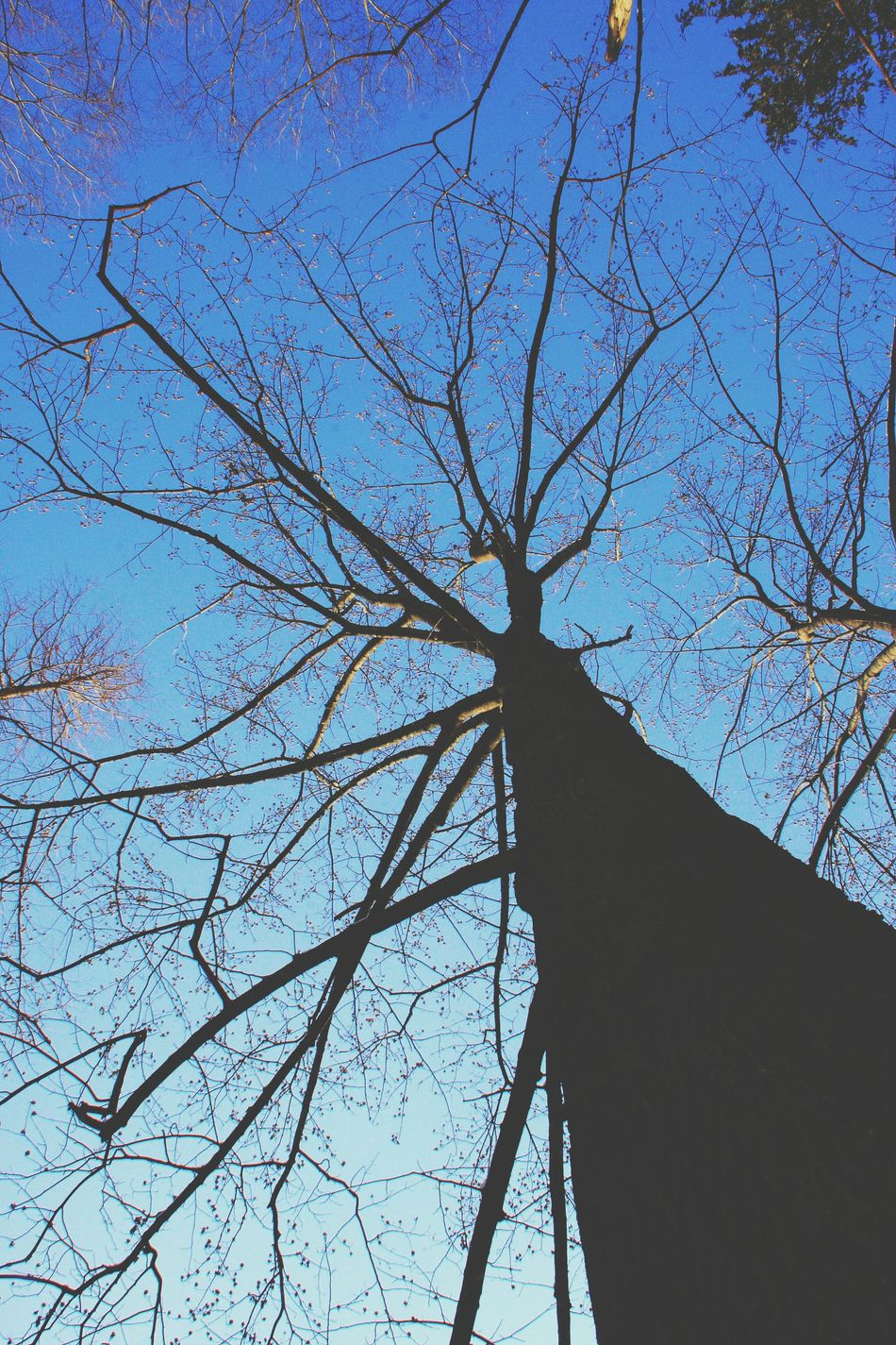 Tree Low Angle View Sky No People Blue Nature Branch Outdoors Day Clear Sky Beauty In Nature Bird Animal Themes Snow Time Winter Nami Island Nami Island , Korea Korea Trees Tree Low Angle View Nature Beauty In Nature