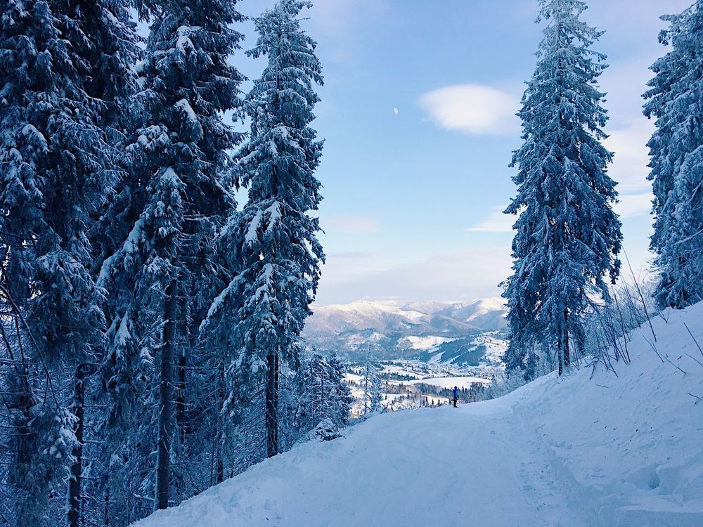 Beauty In Nature Cold Temperature Day Forest Landscape Mountain Mountain Range Nature No People Outdoors Pine Woodland Polar Climate Scenics Sky Snow Tree Winter
