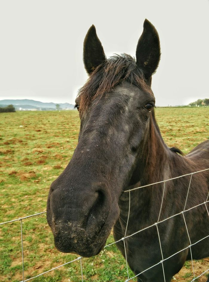 Why the long face? Parets Paretsdelvalles Oneplusone Oneplus Oneplusphotography Horse Caballo Animal