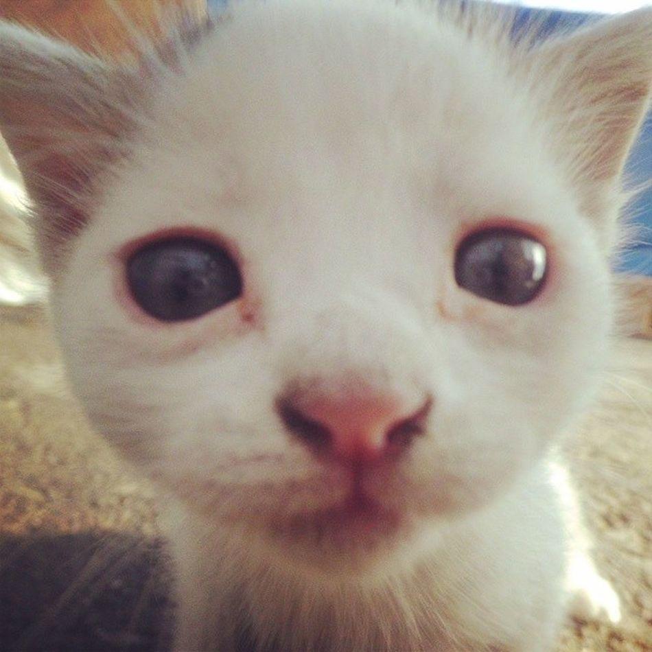 Hayatim Objektifimden Oan Cat kedi turkey turkiye istanbul sevgi samsun selfie