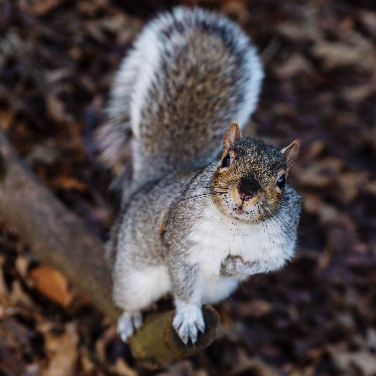 Portrait of a squirrel Animal Themes Animal Photography Tree Branch  Beauty In Nature Park Life Nature On Your Doorstep Animal Portrait Animal Posing Nature Photography Animals Squirrel Nature Animal Wildlife Park Sitting Looking At Camera Domestic Animals Pets Domestic Cat No People Nature Close-up Portrait Outdoors Day